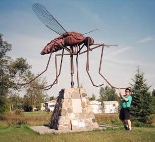 Komarno, Manitoba, the Mosquito Capital of Canada