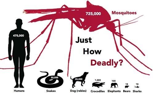 Mosquito world's deadliest animal